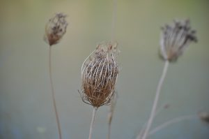 Flores secas. Fotografía de Antonio Lopera