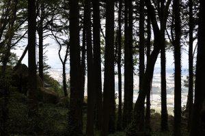 bosque sintra