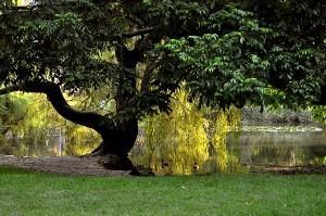 Fotografía Parco Sempione, Milan, Milano, Italia. Autor: Antonio Lopera