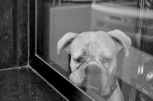 Fotografía en Córdoba. Retrato de perro. Autor: Antonio Lopera