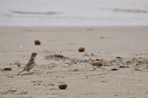 Retrato de un pajarito en la playa de Viareggio. Fotografía de Antonio Lopera