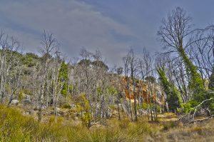 Bosque en Zuehros (Córdoba). Fotografía de Antonio Lopera
